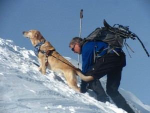 The quintessential 2020 Vision Quest image with Quinn guiding Randy up the steep, snowy, craggy summit of Mt. Monroe. Quinn's golden muzzle basks majestically against the blue sky background illuminated by the sunshine while he patiently pauses for Randy, one hand on the harness, one hand on the snow as he struggles up the final slope to the summit!