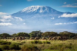 Mt. Kilimanjaro with elephants in the foreground.
