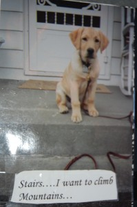 """Puppy Quinn sits on stairs with the caption """"Stairs... I want to climb mountains."""""""