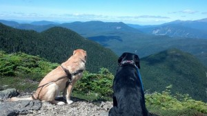 Quinn and Puppy In Training Frisco survey a view of majestic mountains from Signal Ridge
