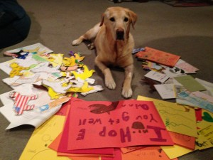 Quinn sits amongst a batch of get well and thank you cards