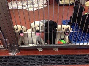 The puppies are eager to say hi!