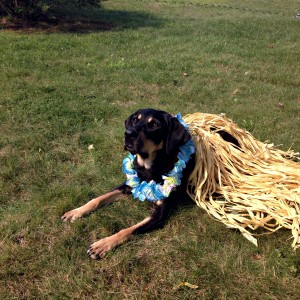 Autumn takes a moment from her luau to say hello! She is wearing a lei and and a grass skirt.