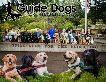 An image of 14 people outside (most with a dog in front of them - looks like various stages of training and/or full guide dogs), in front of what looks like a sign stating