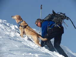 Quinn's golden muzzle thrust majestically into a blue sky background with his eyes closed as he basks in the sun. He is in harness and Guiding Randy to the top of a very steep Mountain summit with snow capping the rocky peak!